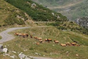 Los ganaderos de Mieres piden la regulación de los pastos en Puerto Pinos (La Nueva España)